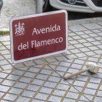 Manolo Sanlúcar en contra de la retirada de la Avenida del Flamenco en Córdoba